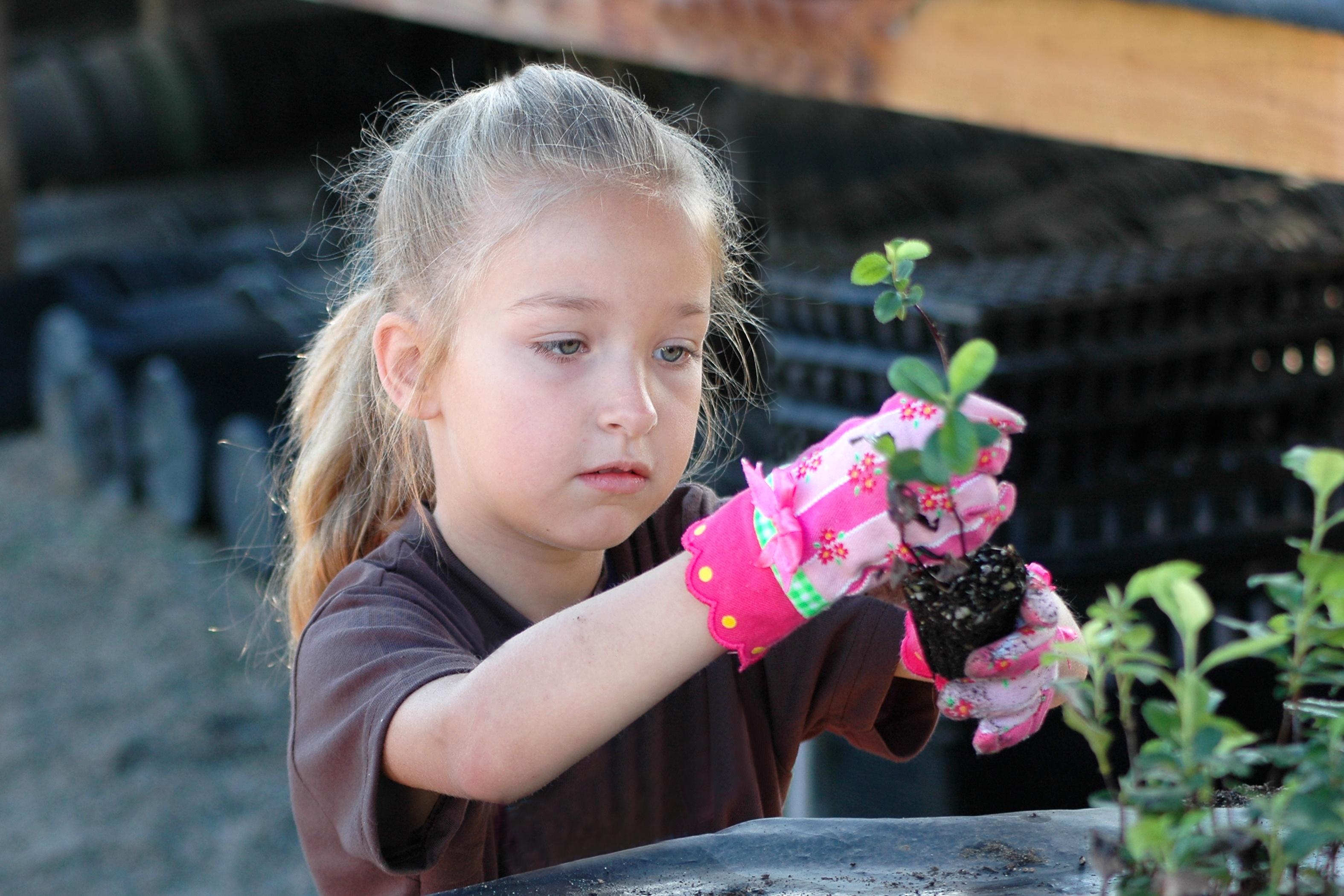volunteer opportunities students plant
